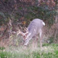 4 Proven Steps to Improve Small Deer Hunting Properties