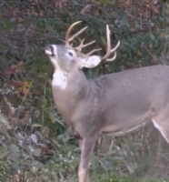 How to Keep Your Public Land Hunting Spots Hidden