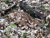 Top 10 Fawns Photos from DDH Readers