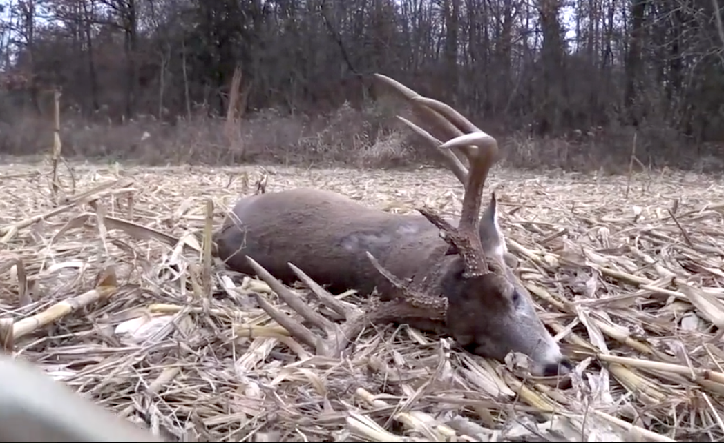 e4062fccf07 How and Why the Weather Affects Whitetail Deer Movement and Hunting