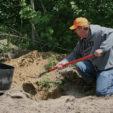 Cheap Deer Habitat Improvements