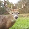 Create Flow Zones for Deer Movement