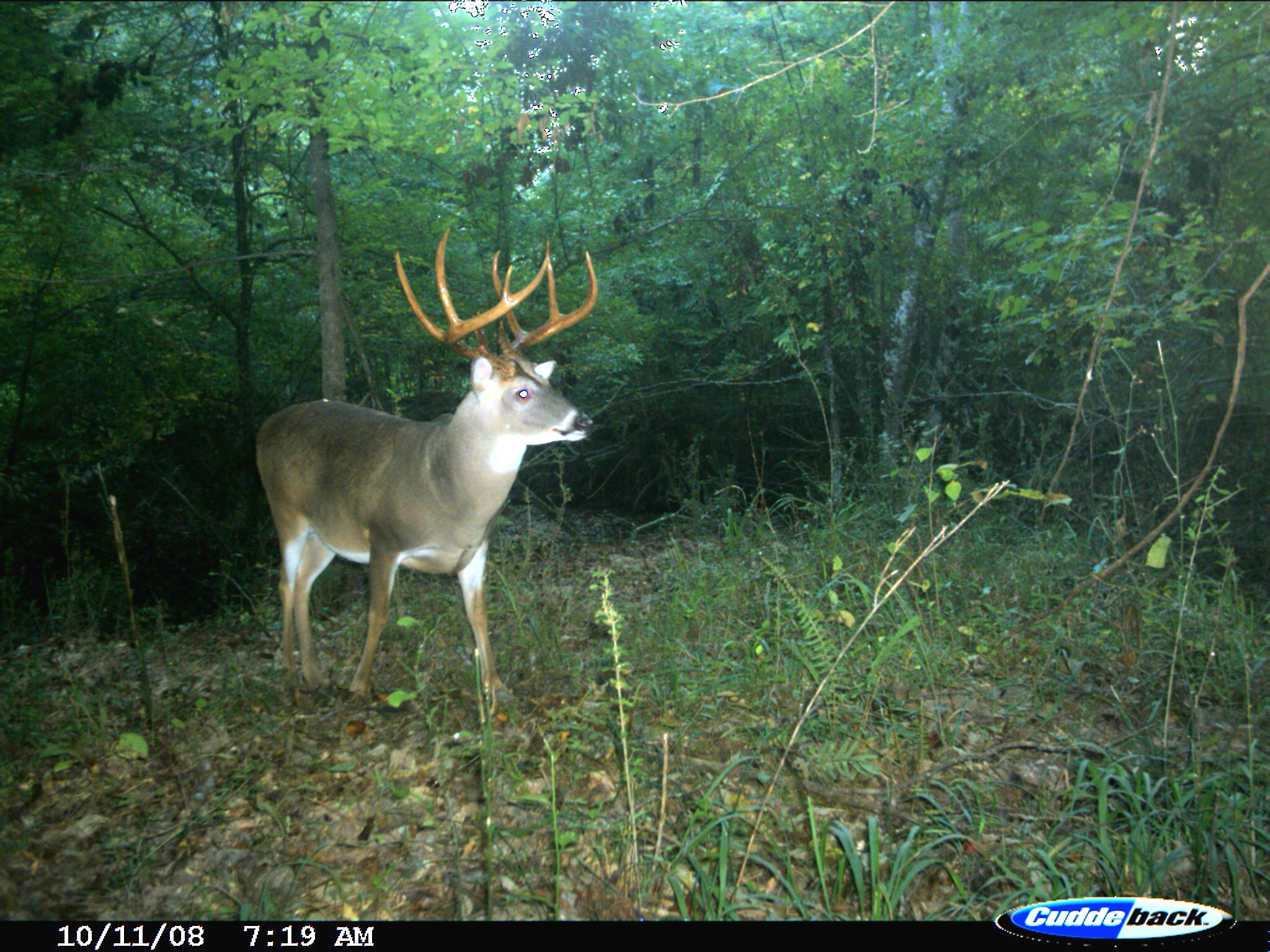 EXCLUSIVE: Peak 2016 Rut Forecast for Southern Deer Hunters - on