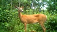 Back to Basics: Wildlife Management 101