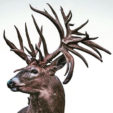 Facts and Myths About Deer Antler Genetics