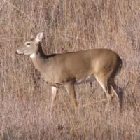 Deer Management Discussion: The Big-Picture Perspective