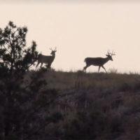Destination Whitetail: Wonderful Wyoming