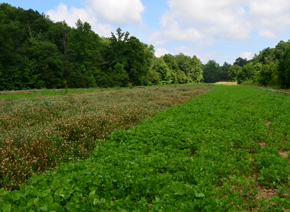 Early Season Herbicide Tips for Food Plot Preparation -