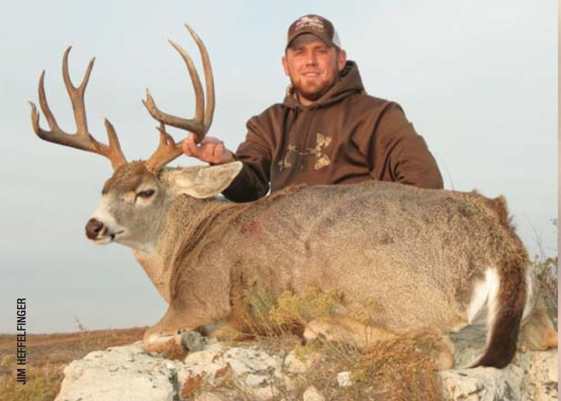 Hybridization A Unique Tail Of Whitetails And Mule Deer