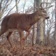 How to Create Your Deer Habitat Improvement Plan