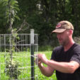 How to Grow Fruit Trees for Deer