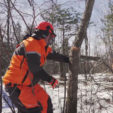 How to Improve Deer Habitat with Hinge Cutting