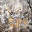 How to Take Advantage of Big Buck Bedding Areas