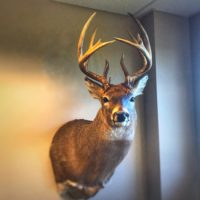 Taxidermy Prices: What Should a Deer Mount Cost?