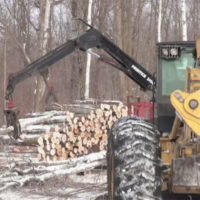 Logging and Hinge-Cutting: Strategic Tools for Deer Habitat