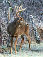 3 Reasons for a Mobile Deer Stand Setup on Public Land