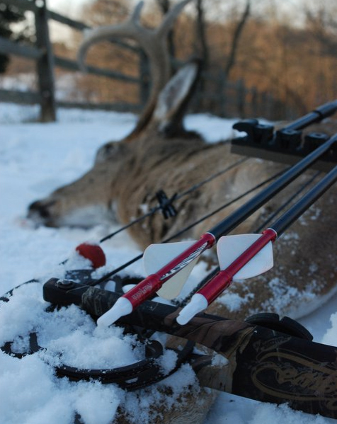 Reading Clues From Your Arrow Before Tracking Your Deer