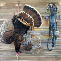 Off-Season Bonus: Crossbow Turkey Hunting Tips