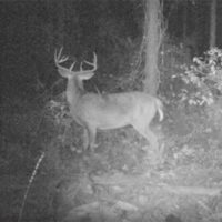 Proven Trail Camera Setup Tricks