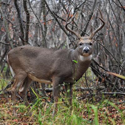 Key Element to Success on Public Hunting Land