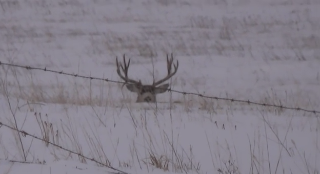 big buck sheds both antlers on film