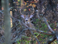 Become a Student of the Whitetail