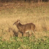 Simple, Cheap Ways to Enhance Your Food Plots
