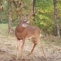 Small Steps to Create Better Whitetail Habitat