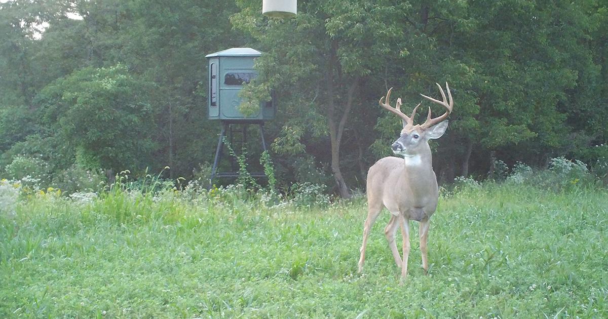 deer movements