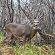 Top 3 Spots for Hunting Public Land Bucks