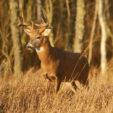 Top Underrated Tip to Help Gun Hunters See More Deer