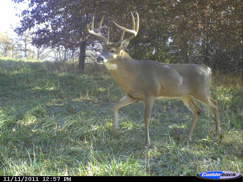 6435e6ed7b9 Now is a great time to start your post-season camera surveys and keep up