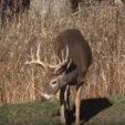 Understand Research-Based Deer Habitat Management Plans