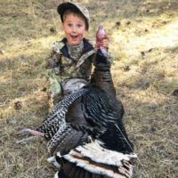 Wild Turkeys: An American Success Story