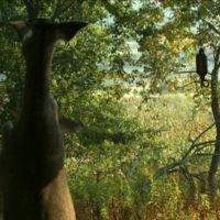 deer scent attracts deer