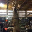 What's The Biggest Deer You've Ever Seen? Stump Sitters® Insights