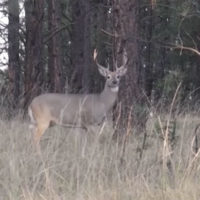 Bowhunting Lesson: When Deer Become Moving Targets