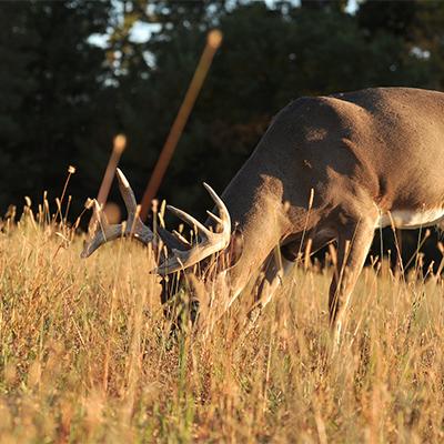 deer food sources