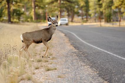 Save-A-Deer ** Whistle Alert Deer Whistle Deterrent Car Truck NEW