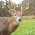 Deer checking out food plot alternatives