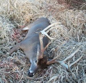 World Record 8 Point Buck Update