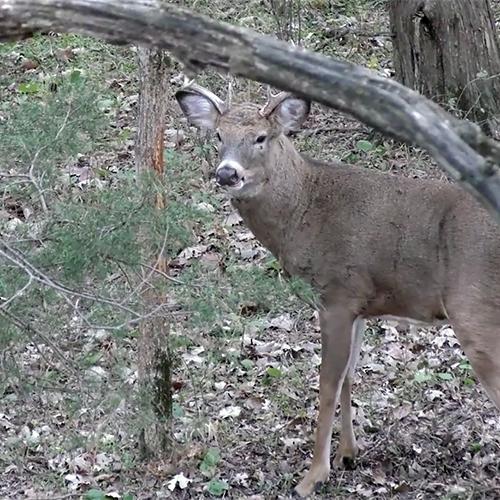public land deer hunting tips