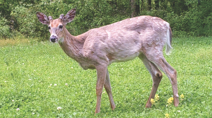 Stop Stressing Out Your Deer Herd