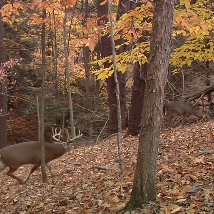 The Best Time to Hunt the Rut