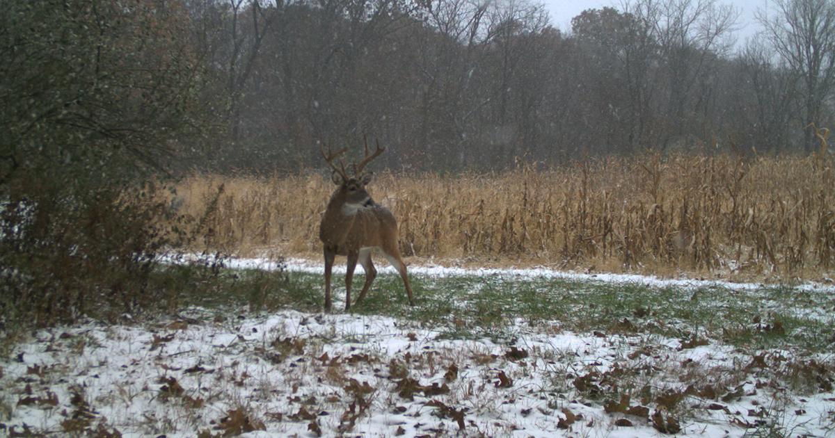 How Deer Use Core Areas | Understanding Mature Bucks
